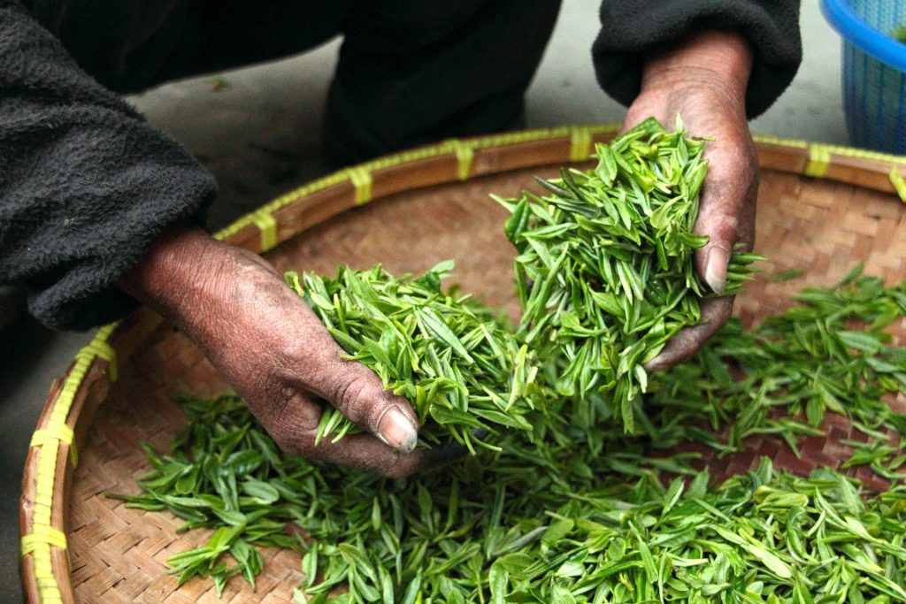 Picking tea leaves from a circular woven basket